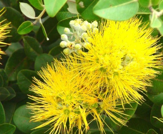 スライド 黄色い花